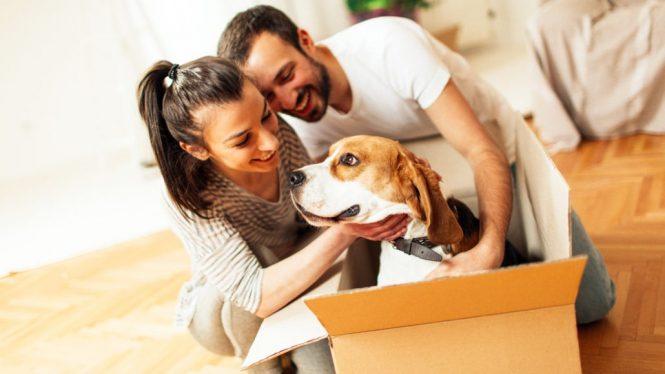 Selidba i kućni ljubimci – šta treba da zapamtite?